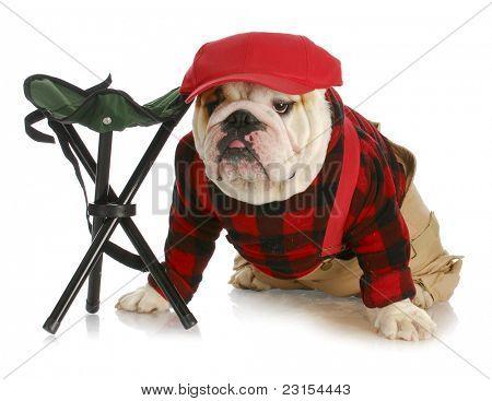 hunting dog - english bulldog dressed like a hunter wearing red baseball cap sitting beside hunting stool