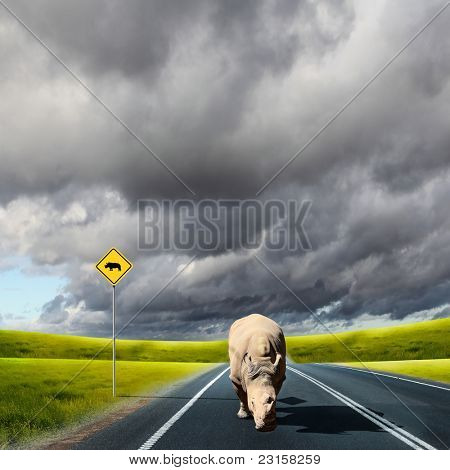 Collage with big wild rhino wlaking on a road