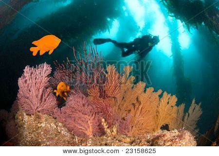 Colorful Underwater Reef
