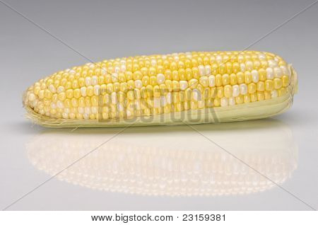Ear of sweet corn closeup isolated on gray background