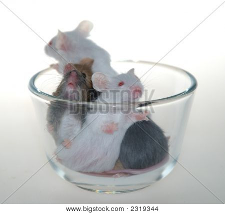 Mice In Cup