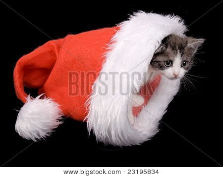 Kitten in a Santa Claus hat