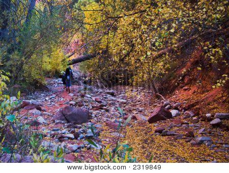 Senderismo en el lecho de un río en colores de otoño