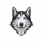Husky Dog Portrait. Husky Head. Dog Breed. Vector Illustration. Dog With Different Colored Eyes. Sib poster