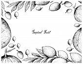 Tropical Fruits, Illustration Frame Of Hand Drawn Sketch Sandoricum Koetjape, Santol Or Krathon And  poster