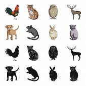 Puppy, Rodent, Rabbit And Other Animal Species.animals Set Collection Icons In Black, Cartoon Style  poster