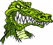 foto of gator  - Cartoon Image of a Gator or Crocodile - JPG
