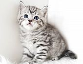 Cute Kitten Is Sitting. Striped Kitten. Kitten For Advertising Your Products poster