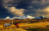 stock photo of bronco  - Grazing horses at sunset - JPG