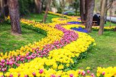Colorful Flower Beds During The Annual April Tulip Festival In Istanbul, Turkey In Yildiz Park poster