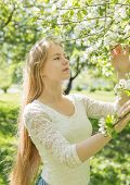 Teenager Stands Near An Apple Tree In A Blooming Apple Orchard On A Spring Sunny Day And Looking Up poster