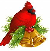 picture of cardinal  - Cardinal Bird with Christmas bells over white - JPG