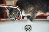 Tabby Cat Watching The Water From The Tap poster