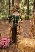 stock photo of oz  - lifesize replica of the scarecrow from the wizard of oz - JPG