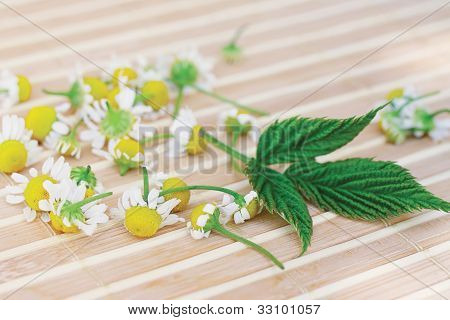 Chamomile and green leaf on a bamboo table
