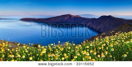 Wildflowers on Santorini