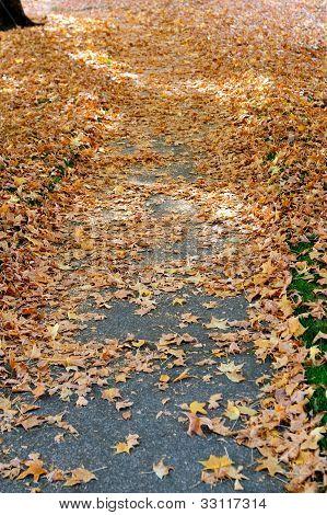 Autumn Leaves On Sidewalk