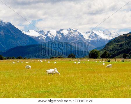 Aoraki, Mt Cook highest peak of Southern Alps, NZ