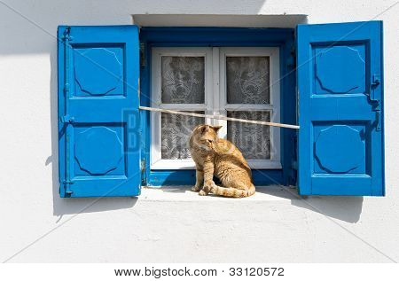 Blue Window And Red Cat