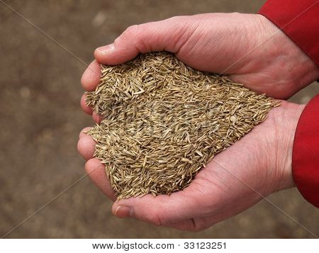 Heart From Grass Seeds