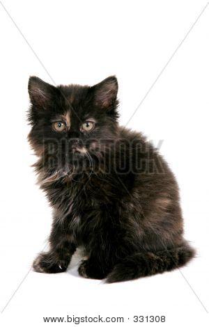 Gatito negro