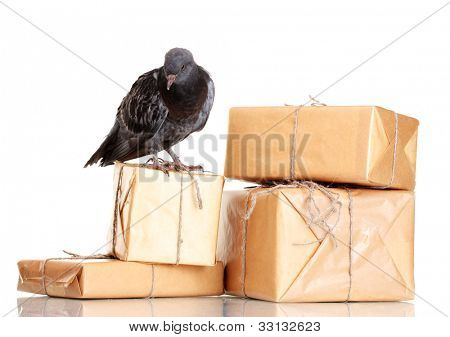 One grey messenger-pigeon and parcels isolated on white
