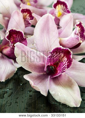 orchids on wenge