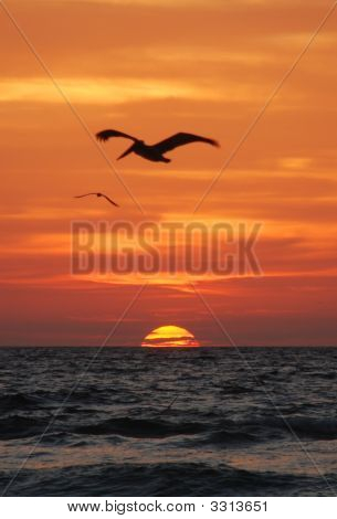 Sunrise And Birds Over The Gulf Of Mexico