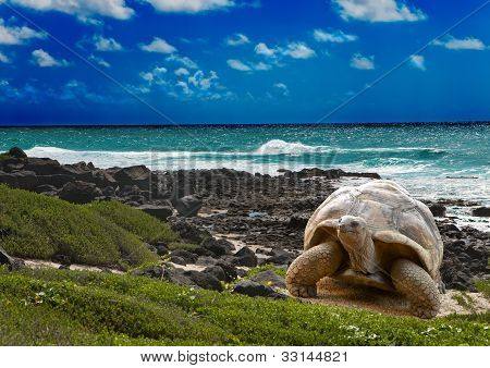 Large turtle at the sea edge on background of a tropical landscape