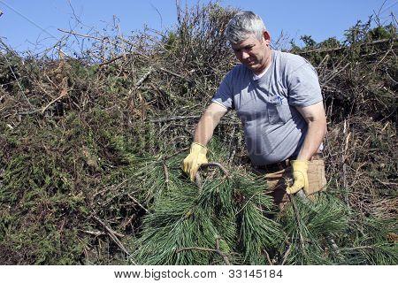 Pine Tree Brush