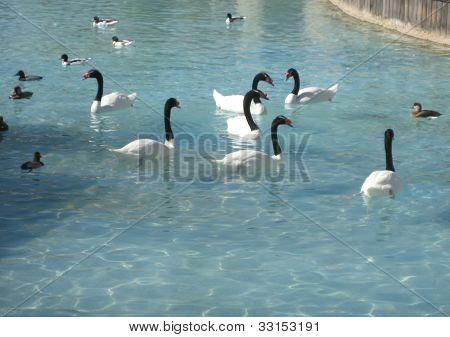 Group os balck and white birds