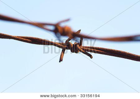 Knotty Barbwire