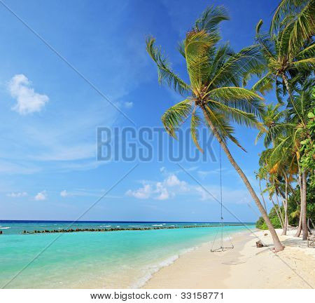 Beach scene with a swing on a palm tree on a sunny day on Kuredu island Maldives, Lhaviyani atoll