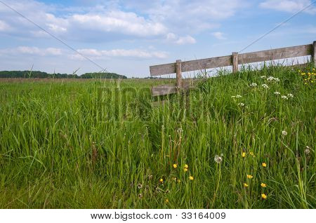 Closeup Of A Rural Landscape In Springtime