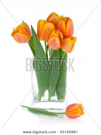 Orange tulips in flower bowl. Isolated on white background