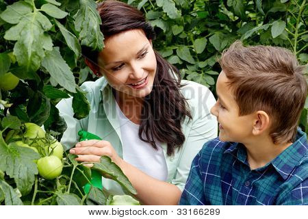 Woman and little boy taking care of tomatoes in the greenhouse