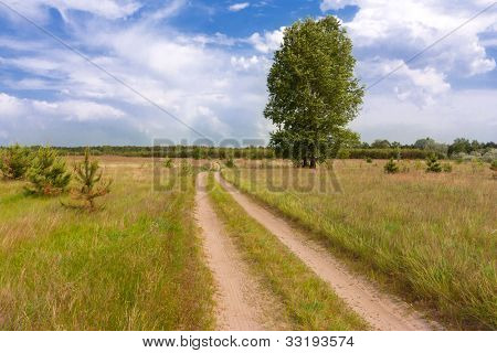 rural road in steppe in summer day