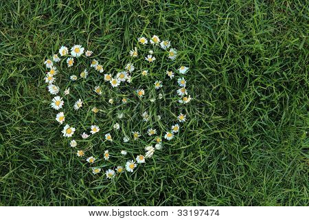 Daisies in love