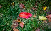Red, Green, Brown, Orange Leaf On Green Grass. Red Autumn Leaves With Green Grass Background. . Colo poster
