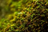 Tree With Moss On Roots In A Green Forest Or Moss On Tree Trunk. poster