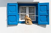 picture of blue white  - Blue window of whitewashed house and red cat sitting between shutters - JPG