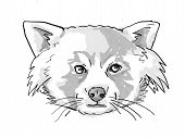 Retro Cartoon Style Drawing Of Head Of A Red Panda, A Cat-sized Species Of Carnivorous Mammal And An poster