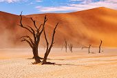 Dead Trees In The Namib Desert At Deadvlei, Famous Landmark In Namibia And Important Tourist Destina poster