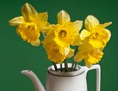 pic of narcissi  - five yellows narcissi in the white vase - JPG