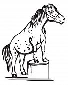 Monochrome Decorative Portrait Of Pony Standing In Profile On A Stump, Training Pony. Vector Isolate poster