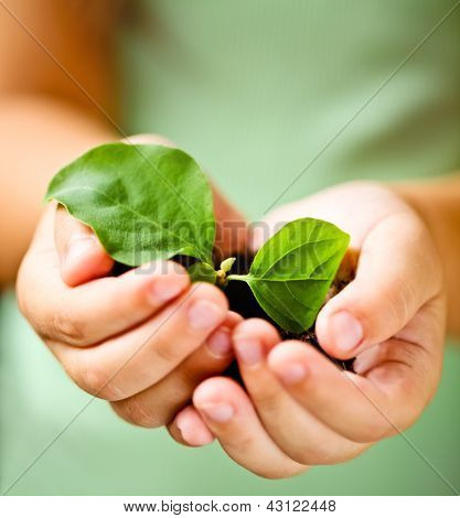 Child Holding Little Plant