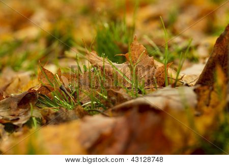 Green Grass In The Autumn