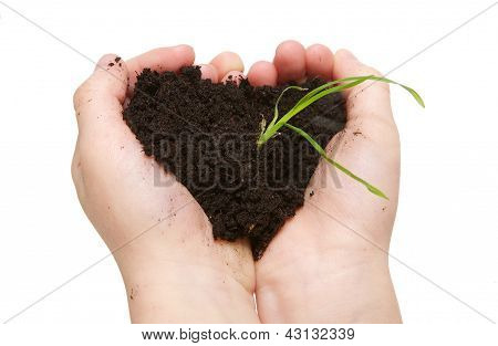 Child Hands Holding Soil With Green Plant Growing
