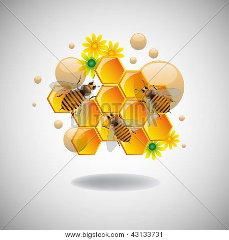 Honeycomb cells and bees