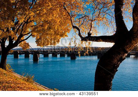 Autumn trees along the Susquehanna River in Harrisburg, PA.